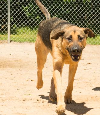 support Florence animal shelter
